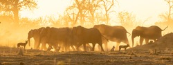 elephants and wild dogs in the dust at sunset