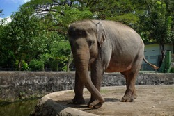Elephants are one of the largest mammals.  There are two recognized species of elephants, African elephants and Asian elephants