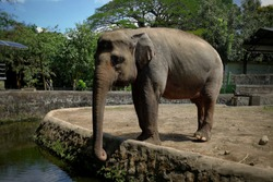 Elephants are one of the largest mammals.  There are two recognized species of elephants, African elephants and Asian elephants.