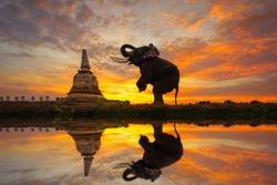 Elephants are worshiping the ancient pagoda at Ayutthaya in Thailand.