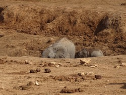 Elephants at Addo National Parc South Africa