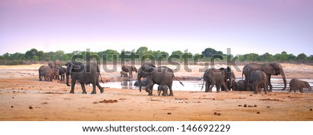 elephants at waterhole dusk