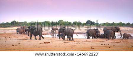 elephants at waterhole dusk