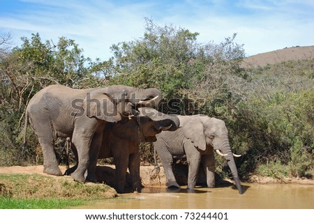 elephants at watering hole in africa