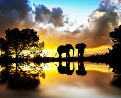 elephants between plants Lake