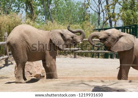 Elephants Couple in the Shanghai Wild Animal Park