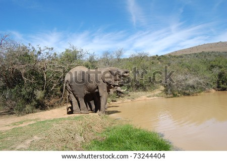 elephants drinking at watering hole