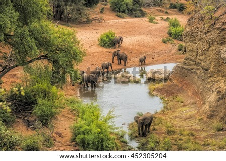 Elephants drinking water at the viewpoint Red Rock in the Kruger national park #452305204