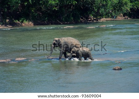 Elephants' family in the jungles