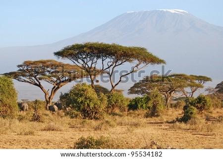 Elephants fronting Mt. Kilimanjaro