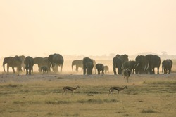 Elephants in Amboseli (Kenya)