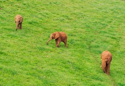 elephants in bucolic green landscape in Cabarceno natural park in Cantabria, Spain