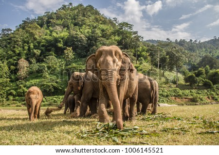 Elephants in Chiang Mai. Elephant Nature Park, Thailand