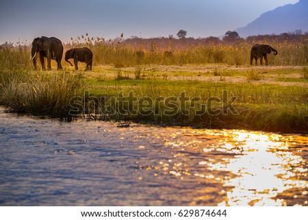 Elephants in Lower Zambezi National Park - Zambia