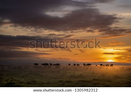 Elephants in the misty mornings of Africa #1305982312