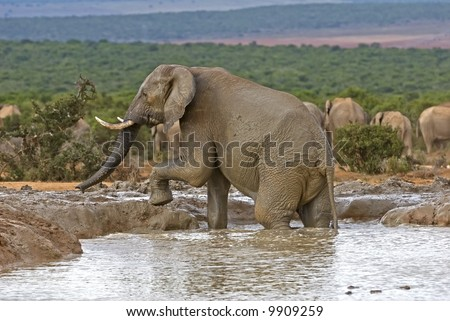 Elephants love playing and swimming in water