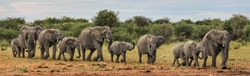 Elephants marching on parade in Namibia