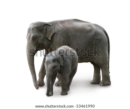 Elephants - mother and baby, isolated with path, shadow