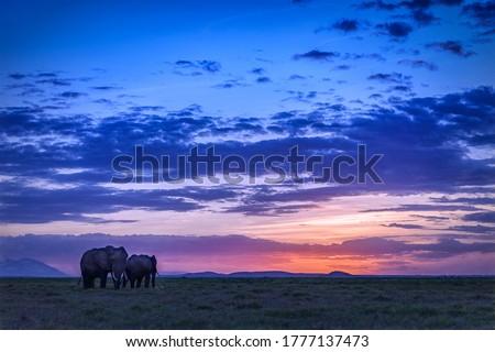 Elephants silhouettes sunrise savannah landscape. Sunrise elephants view. Sunrise in savannah