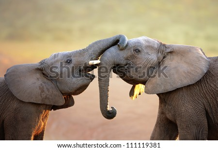stock photo elephants touching each other gently greeting addo elephant national park 111119381 - Каталог — Фотообои «Животные»
