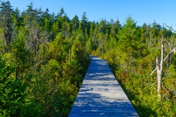 Elevated footpath in the Caribou Plain, Fundy National Park, New Brunswick, Canada