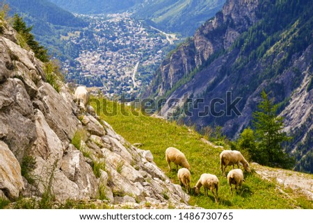 Elevated view of a flock of sheep grazing in a pasture on the slopes of a mountain in the Mont Blanc massif with Courmayeur city in the valley in the background in summer, Aosta Valley, Alps, Italy #1486730765