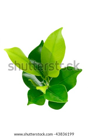 Elevated view of green young plant on white background