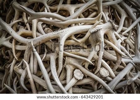 Elk Antlers #643429201