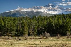 Elk at Upper Beaver Meadows, Rocky Mountain National Park.  Estes Park, Colorado.