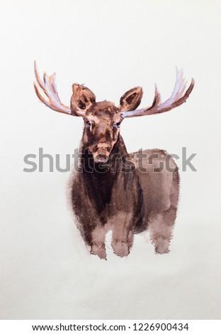Elk, portrait. Watercolor drawing.