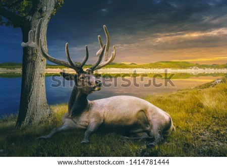 Elk relaxing by a river - photo manipulation