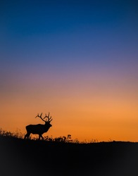 Elk Silhouette on a Mountain at Sunset