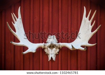 elk skull and antlers mounted on a red wooden wall with vignetting