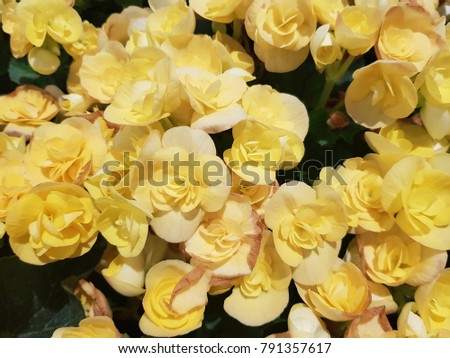 ellow roses are your best friend. In fact, yellow roses are a traditional symbol of friendship