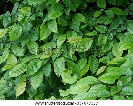 elm tree with green leaf