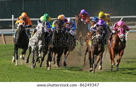 ELMONT, NY - OCT 8: The field takes the far turn in claiming race at Belmont Park on Oct 8, 2011 in Elmont, NY. Eventual winner is Monzante (grey roan on left).