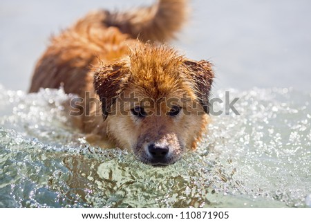 Elo puppy in a wave of sea water