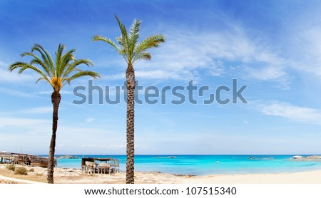 Els Pujols formentera beach with turquoise water and palm trees in balearic islands