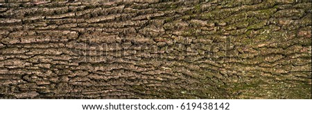 Embossed texture of the bark of oak with green moss. Panoramic photo of the oak texture.