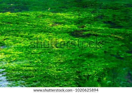 Emerald green flowing river water with seewead Stock fotó ©