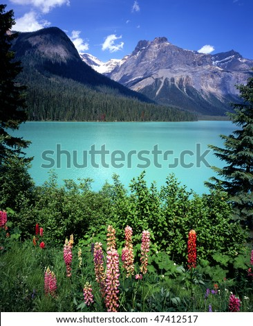 Emerald Lake Flowers - Yoho National Park, British Columbia, Canada