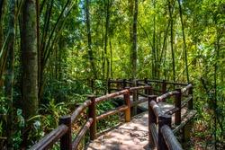 Emerald Pool, Yosemite National Park, Krabi, Thailand, Wooden path trough jungle forest