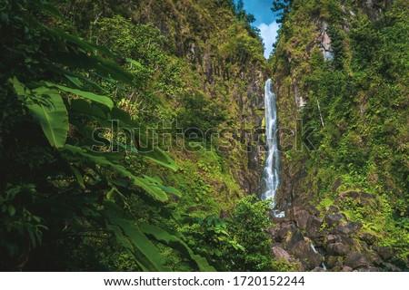 emerald waterfall in tropical green rainforest, Dominica, Caribbean Island Stockfoto ©