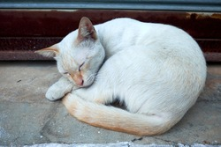 Emotional kitten in sunlight. Calm white kitten sleeps on the doorstep of a terrace on the floor in sunlight. The cat is sitting on the street