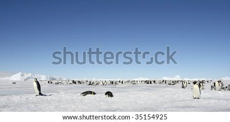 Emperor penguin (Aptenodytes forsteri) colony on the sea ice in the Weddell Sea, Antarctica - stock photo
