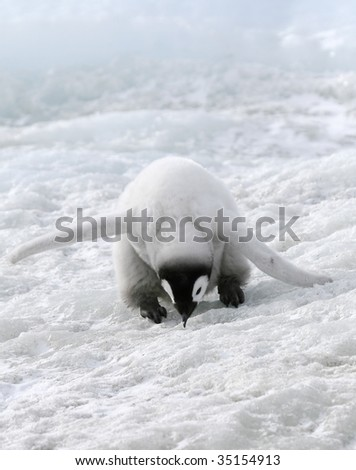 Emperor penguin chick (Aptenodytes forsteri) on the ice in the Weddell Sea, Antarctica - stock photo