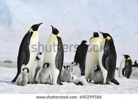 Emperor Penguin colony at Snow Hill in  Antarctica.