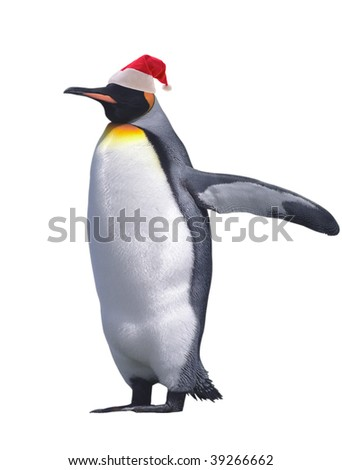 Emperor penguin in Santa Claus hat isolated on white with clipping path