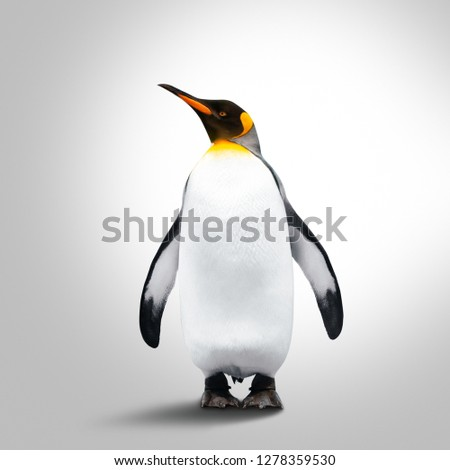 Emperor Penguin Isolated On Gray Background. Penguin Looking Left