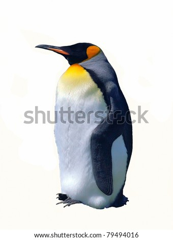 Emperor penguin isolated on white